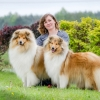1r-blanche-fellow-of-eternity-collie-rough-female 1